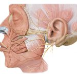 Why the Facial Nerve Is More Important Than You Think